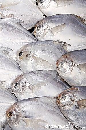 Fish.sea food.