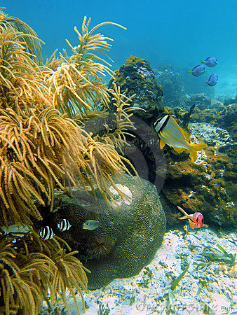 Fish with sea plume and hard coral