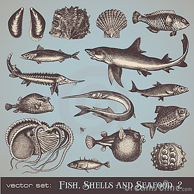 Free Fish, Shells And Seafood (set 2) Royalty Free Stock Image - 20061206