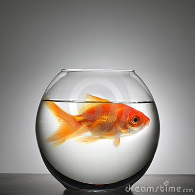 Fish in small bowl stock images image 4002754 for Small fish bowl