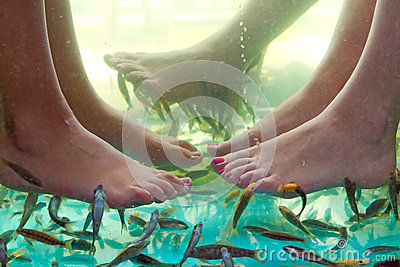 Fish spa pedicure of feet