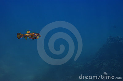 Fish swimming over coral reef