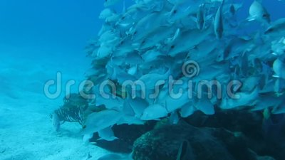 Fish Swimming Together in Cozumel, Mexiko stock video