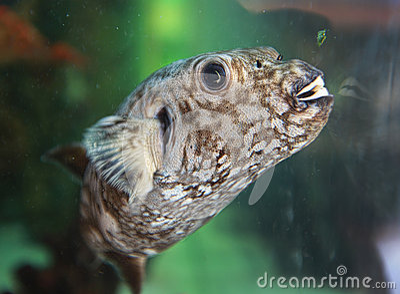 Fish with teeth