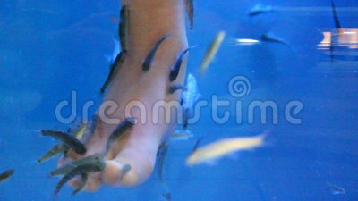 Fish therapy stock footage video 43107018 for Fish pedicure price
