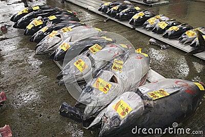 Fish at Tsukiji market, Japan
