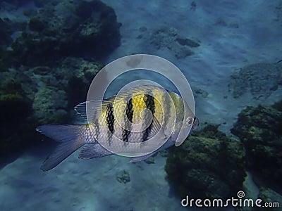 Fish Underwater in the Ocean