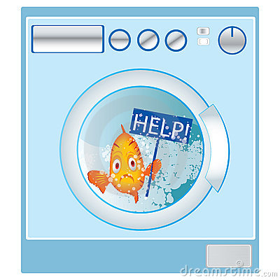 Fish in washing machine