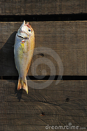 Fish on wood