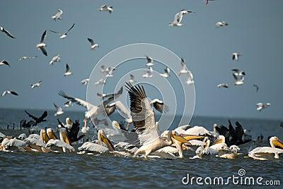 Fisherbirds