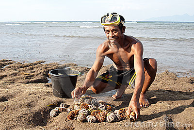 Fisherman with sea urchins Editorial Stock Image