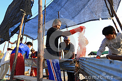 Fishermen processing jellyfish catch from sea Editorial Stock Image
