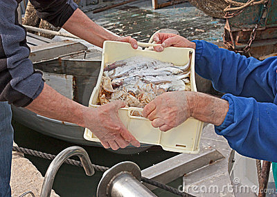 Fishermen unloading crate of fish
