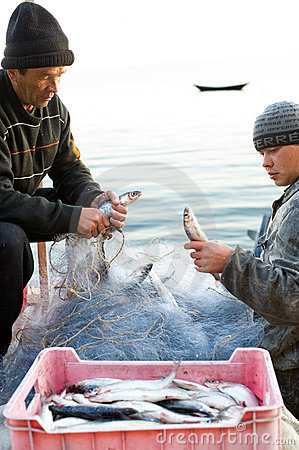 Fishers take fish out of net Editorial Stock Photo