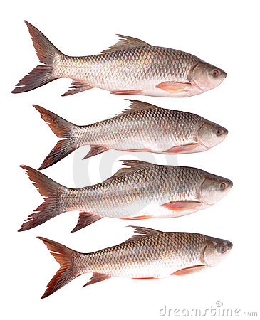 Free Fishes Stock Photos - 11218933