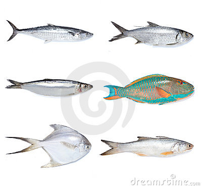 Free Fishes Stock Photos - 12421633