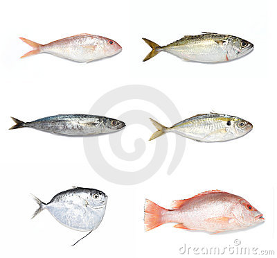 Free Fishes Stock Photography - 12421892