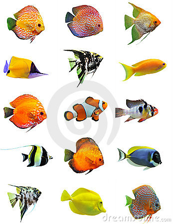 Free Fishes Royalty Free Stock Photos - 15070228