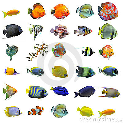Free Fishes Royalty Free Stock Images - 18739489