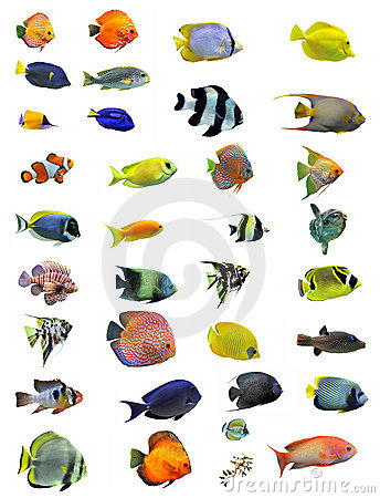 Free Fishes Royalty Free Stock Images - 18824329