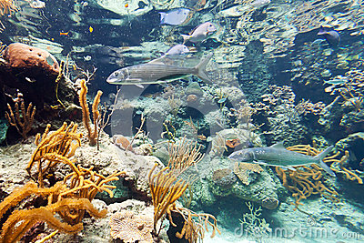 Fishes in Caribbean Sea