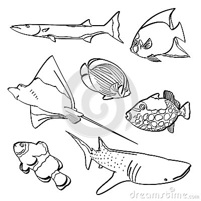 Free Fishes Collection Royalty Free Stock Image - 51051886
