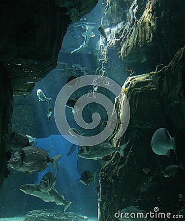 Fishes at Lisbon Oceanarium
