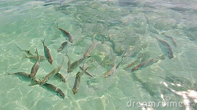 Fishes in phi phi island