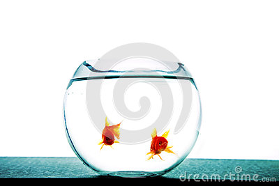Fishes in tank