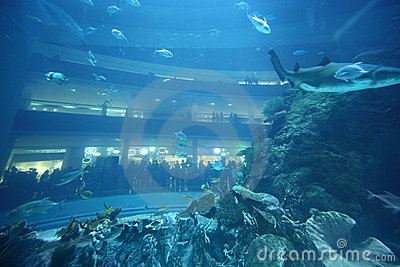 Fishes in underwater aquarium tunnel balconys with people at back
