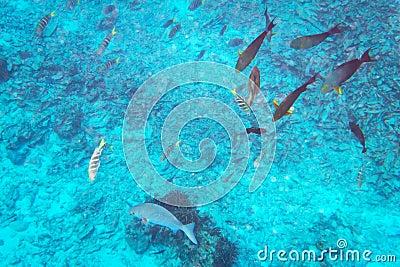 Fishes underwater in Thailand