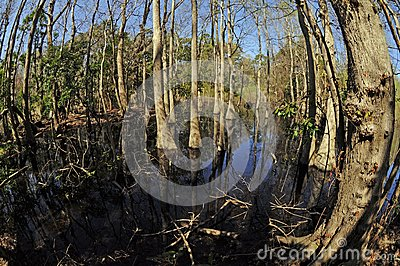 Fisheye forest