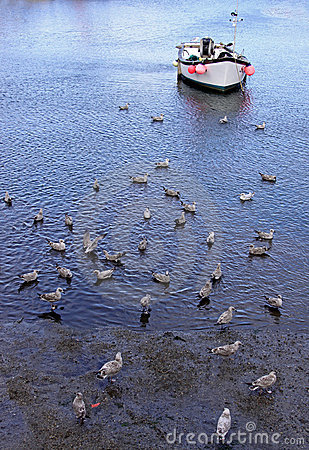 Fishing boat moored in a cove with gulls