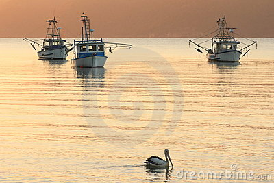 Fishing boats and pelican at sunrise
