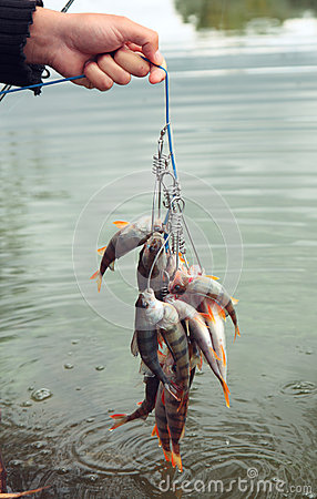 Fishing catch.