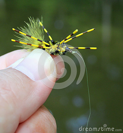 Free Fishing Fly Royalty Free Stock Photography - 37708257