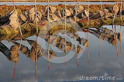 Fishing net in the morning light