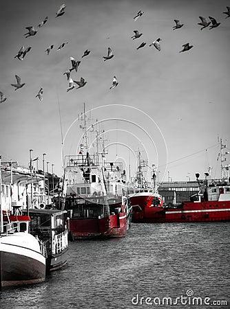 Free Fishing Port Royalty Free Stock Photo - 14366165