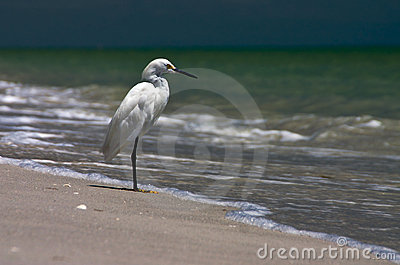 Fishing Shore Bird