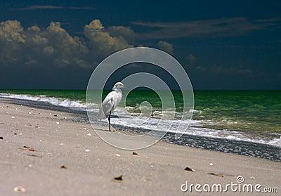 Fishing Shore Bird