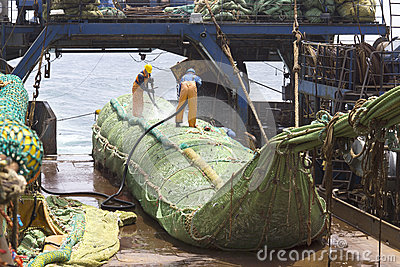 Fishing vessel. Great catch of fish in thrall. Editorial Stock Photo