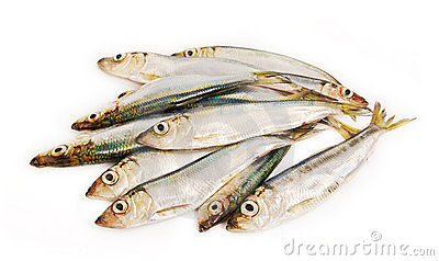 Fishis.