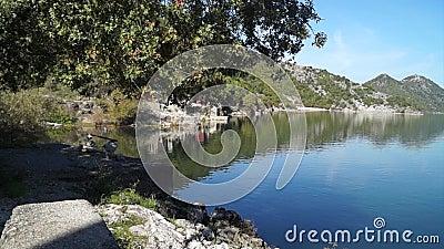 Fiska på sjön i solig dag lager videofilmer