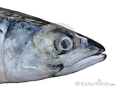 Fiskhuvud