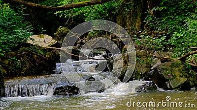 Fiume selvatico veloce e montuoso scorre nella fitta foresta verde stock footage