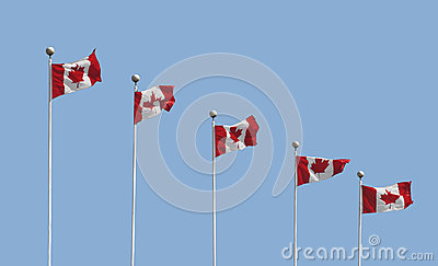 Five Canadian flags on poles isolated