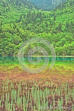 Five Color Lake, Jiuzhaigou, China