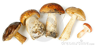 Five Different Mushrooms Stock Images - Image: 22956154