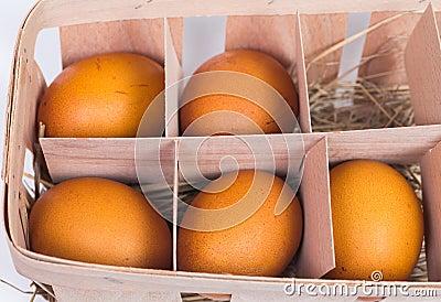 Five eggs in a carton box