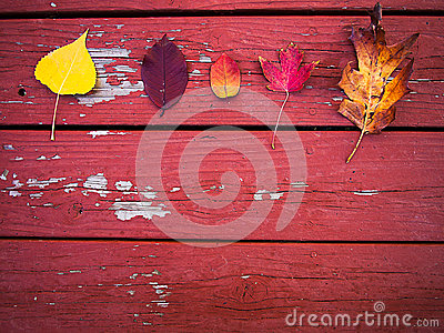 Five fall leaves on wood